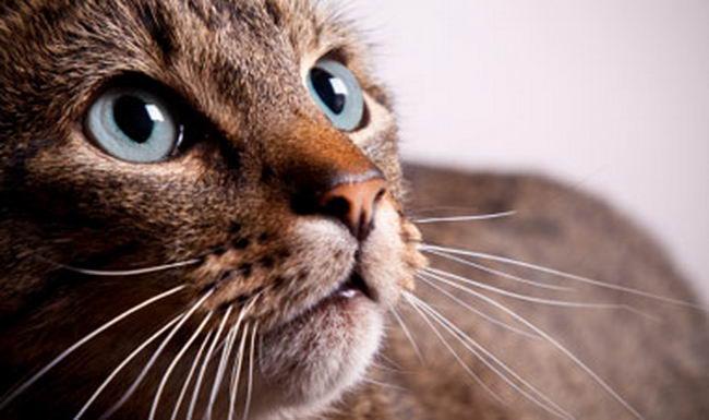 good-cat