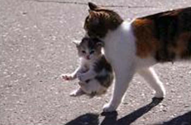 hold-cat-by-scruff14