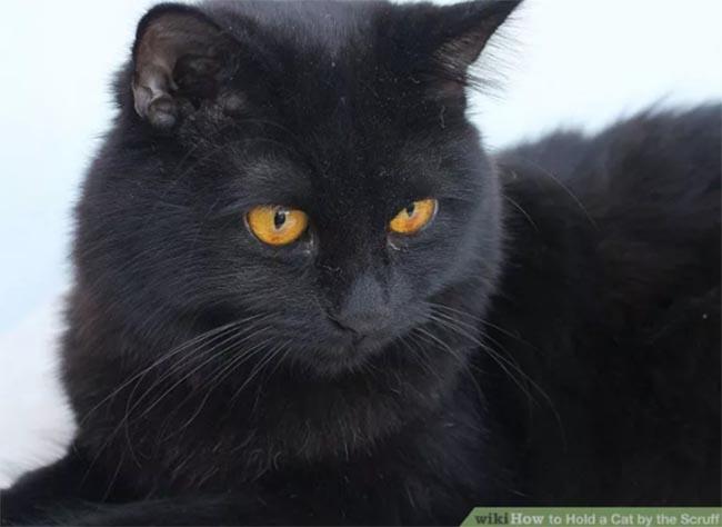 hold-cat-by-scruff2