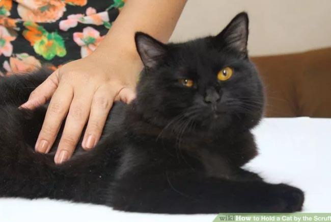 hold-cat-by-scruff4