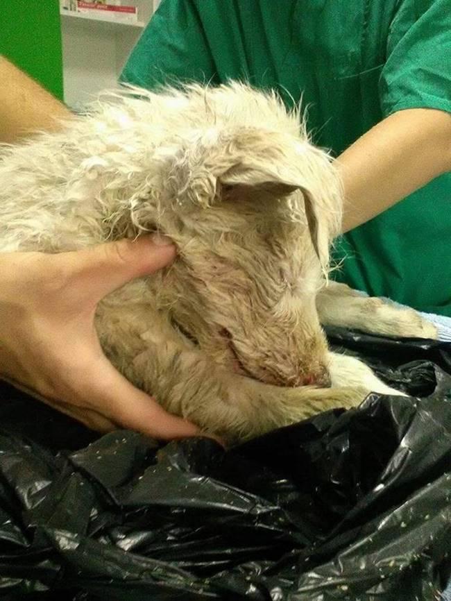 puppy-found-plastic-bag-transylvania-1