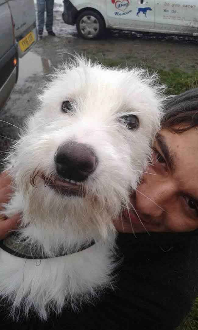puppy-found-plastic-bag-transylvania-12