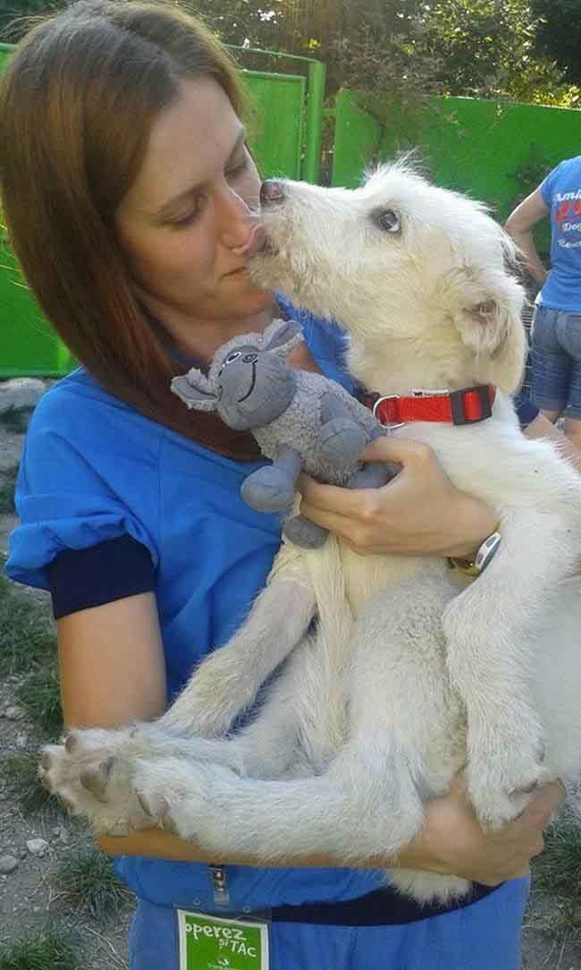 puppy-found-plastic-bag-transylvania-9