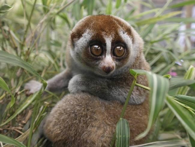10 สัตว์โลกน่ารักที่แฝงความร้ายกาจไว้อย่างคาดไม่ถึง ...