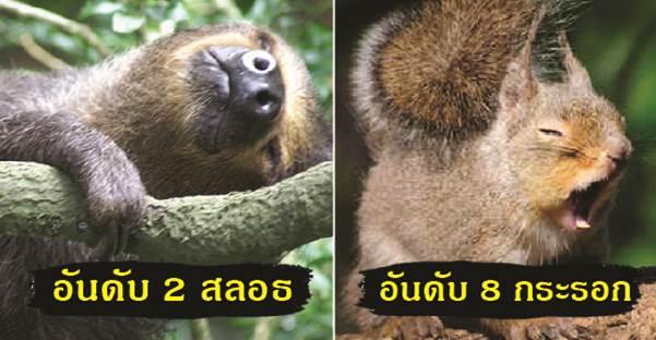10 อันดับสัตว์ขี้เซา ที่แต่ละวันนอนเยอะที่สุดในโลก