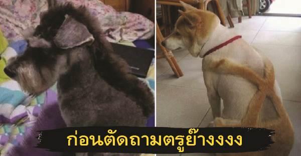 เทรนด์ตัดขนสุนัข ! ที่ต้องร้องว่าถามตรูก่อนตัดหรือยัง ?