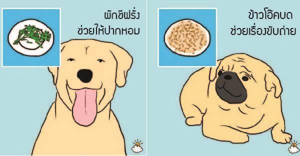 10 อาหารมนุษย์ที่สุนัขกินได้และมีประโยชน์ต่อสุขภาพมากจนคาดไม่ถึง