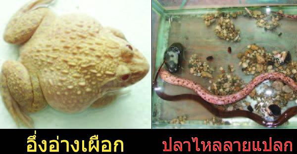 8 สัตว์ประหลาด (เฉพาะในไทย) ที่คนไทยแห่ไปขอหวย !