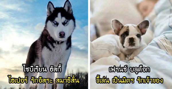 หากคิดจะเลี้ยงสุนัขซักตัว สายพันธุ์ไหนเหมาะกับคุณที่สุด