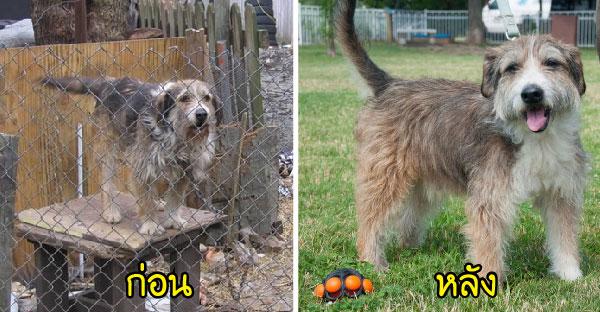 16 ภาพน้องหมาโชคร้ายถูกปล่อยปละละเลย ก่อนมีคนใจดีช่วยเหลือจนดูดีขึ้นผิดหูผิดตา