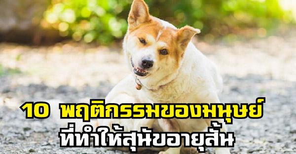 10 พฤติกรรมของมนุษย์ ที่ทำให้สุนัขอายุสั้นลงแบบไม่รู้ตัว