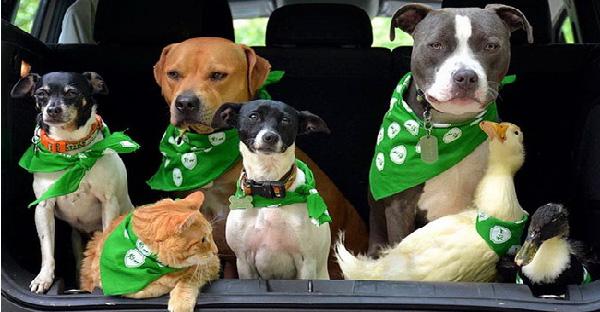 รู้จักครอบครัวหมา 4 เป็ด 2 แมว 1 ที่เคยถูกทอดทิ้ง ก่อนกลายเป็นพี่น้องร่วมผจญภัยไปด้วยกัน