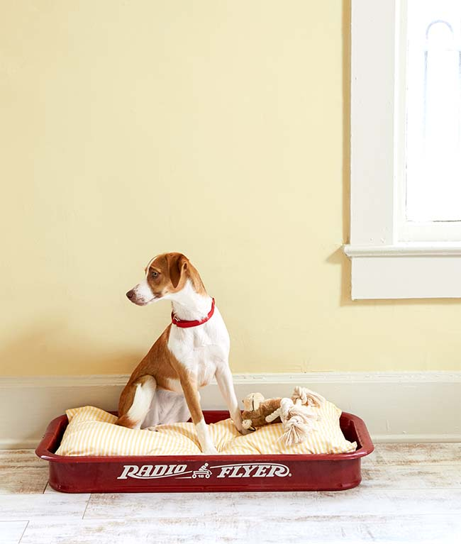 1431974980-little-red-wagon-dogbed-0615
