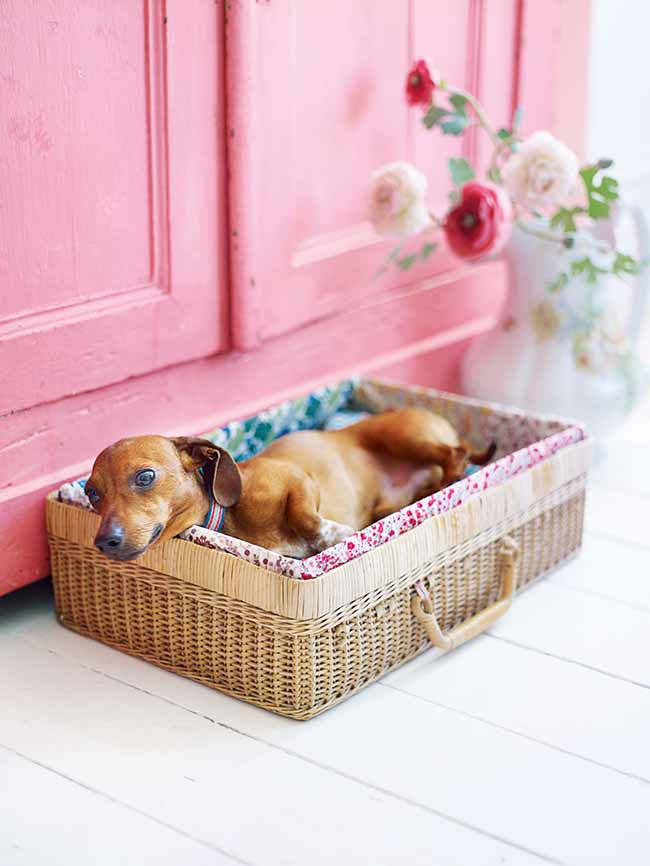 1460131472-checklist-dog-bed-0516