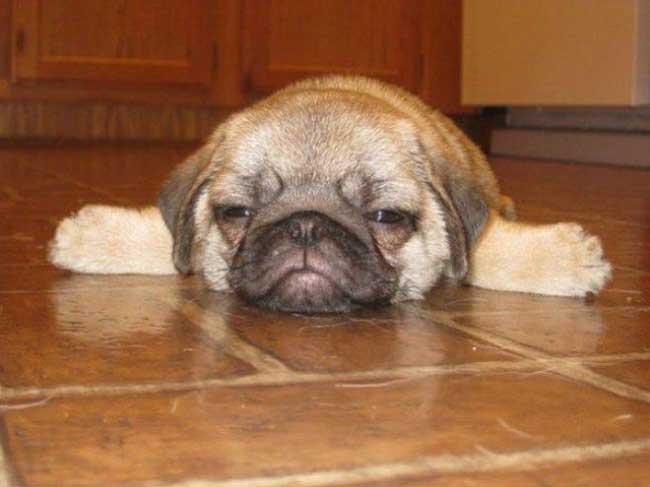 1877855-sleepy-dog10-650-b0222353c9-1484650632