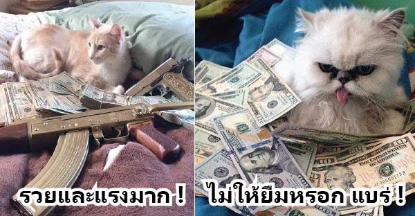 20 ภาพที่แมวอาจจะรวยมากกว่าที่คุณคิด…ยืมซักร้อยสองร้อยได้มั้ย ?