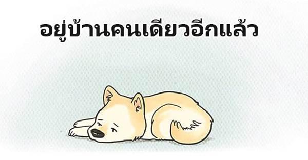เมื่อสุนัขอยู่บ้านเพียงลำพัง มันจะเป็นยังไงบ้างนะ
