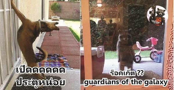 เมื่อสัตว์โลกอยากเข้ามาในบ้านแต่ติดกระจกนี่สิ…ภาพฮาๆจึงเกิดขึ้น