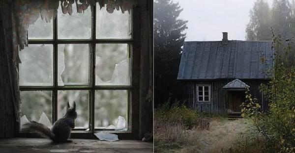 ชมภาพบ้านร้างในประเทศฟินแลนด์ พร้อมกับสัตว์นานาชนิดที่อาศัยอยู่ในนั้น