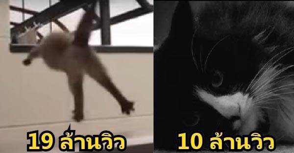 ทาสแมวต้องดู !! 10 คลิปแมวในยูทูปสุดฮิตตลอดกาล