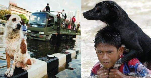 ย้อนรอยภาพน้ำท่วมปี 54 ที่มีหมา-แมวหนีน้ำท่วมเพื่อเอาชีวิตรอด