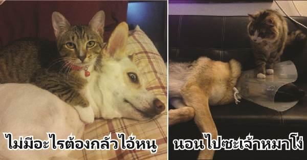 """11 ภาพที่จะแสดงให้เห็นว่าทำไมแมวถึงเป็น """"เจ้านาย"""" ประจำบ้าน"""