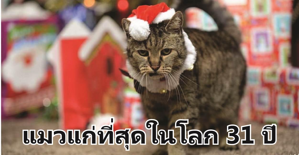 โฉมหน้าของแมวที่แก่ที่สุดในโลก 31 ปี เทียบเท่ามนุษย์ 140 ปี