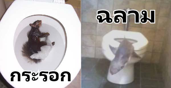 9 สัตว์แปลกประหลาดที่ไม่น่าโผล่มาในโถส้วมได้เล๊ยยย