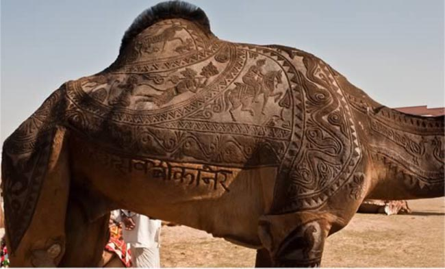 a99083_animal-canvas_1-camel-1