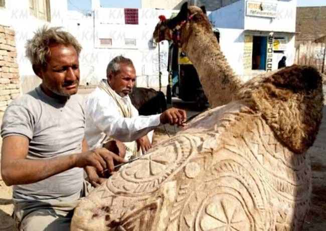 a99083_animal-canvas_1-camel-2
