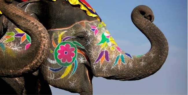 a99083_animal-canvas_10-elephant-1