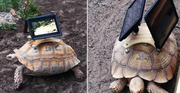 a99083_animal-canvas_4-turtle