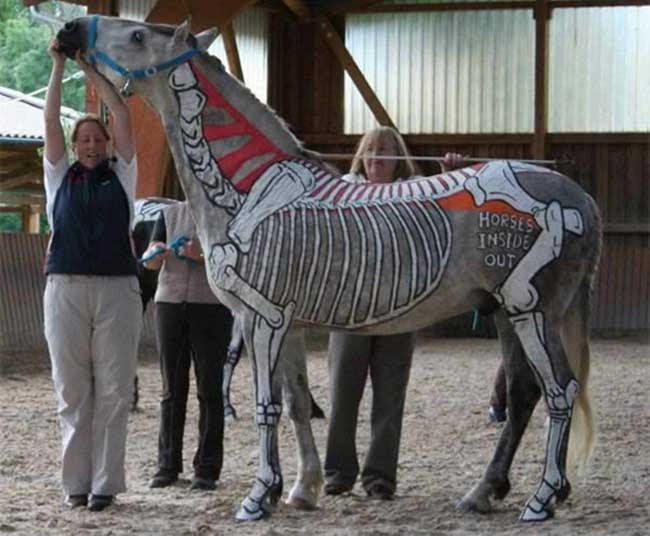 a99083_animal-canvas_5-horse-anatomical-2