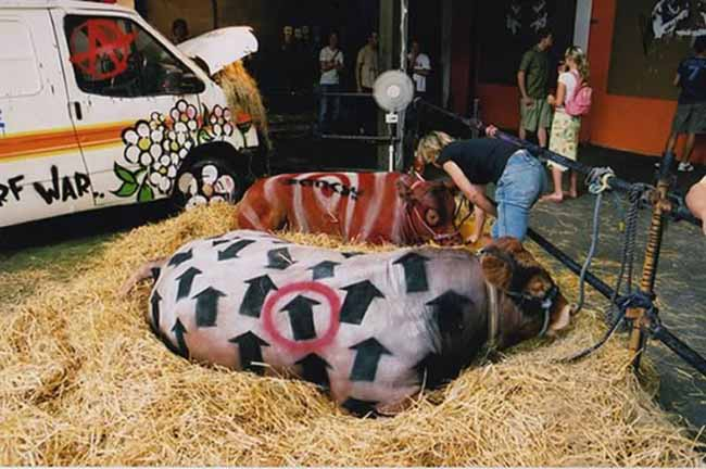 a99083_animal-canvas_8-cows2-2