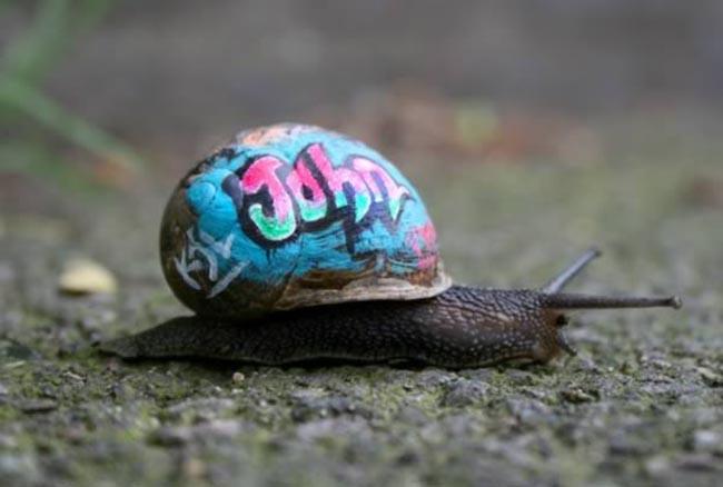 a99083_animal-canvas_9-snails-1