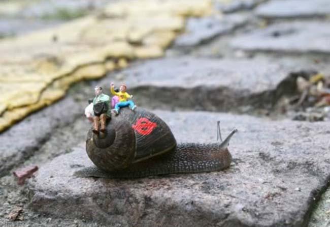 a99083_animal-canvas_9-snails-2