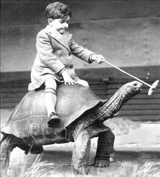 a99748_riding_10-tortoise