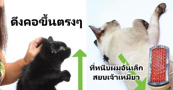9 วิธีดึงคอแมวอย่างถูกต้อง และเผยทริคลับเฉพาะที่อาจใช้ในการสยบเจ้าเหมียวได้ !!