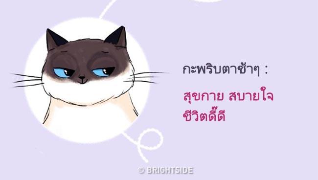 cat language10