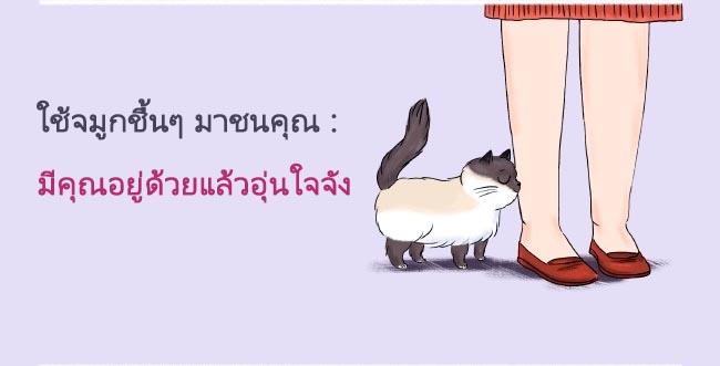 cat language12