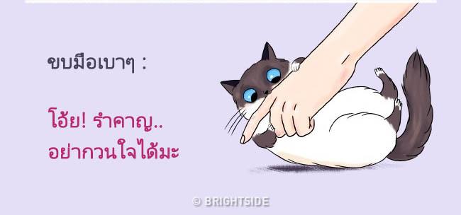 cat language16