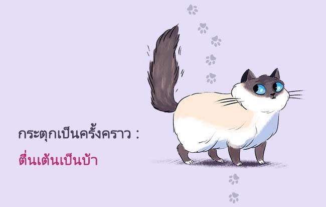 cat language2