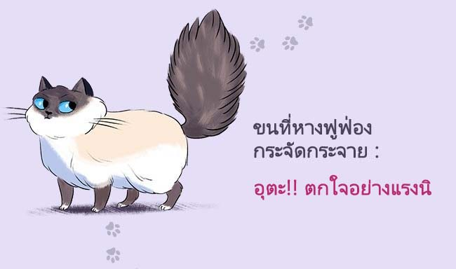 cat language3