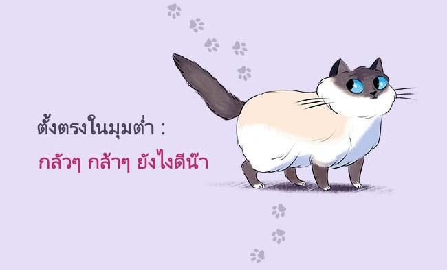 cat language6