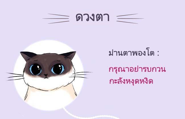 cat language8