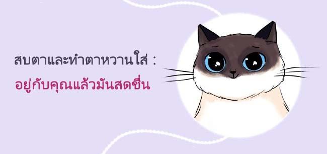 cat language9