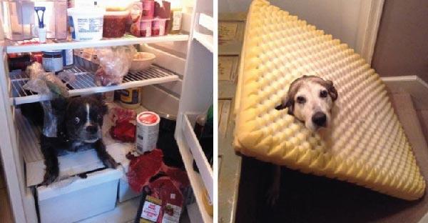 13 ภาพที่คนเลี้ยงหมาไม่อยากกลับไปเจอเลย ให้ตายเถอะ !!