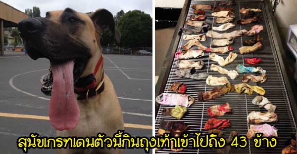 11 ของใช้ทั่วไปที่สุนัขเคยกลืนลงท้องจนเกือบเอาชีวิตไม่รอด