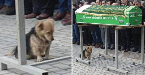 สุนัขใจสลาย ! เมื่อเจ้าของได้จากไปและมันยังทำใจไม่ได้ จึงแอบไปที่หลุมศพเขาทุกวัน