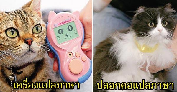 วุ้นแปลภาษาแมวมาแล้ว !! มีทั้งของญี่ปุ่นและยุโรป..แล้วเราจะเข้าใจแมวมากขึ้น